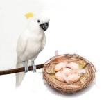 Искусственные птицы для декора.  Декоративные гнезда и яйца