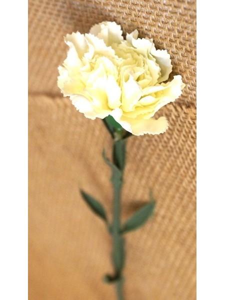 Гвоздика белая 58-70см
