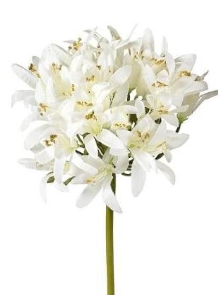 Агапантус 62 см белый