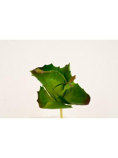 Суккулент 15см*10*10,5см цвет зеленый