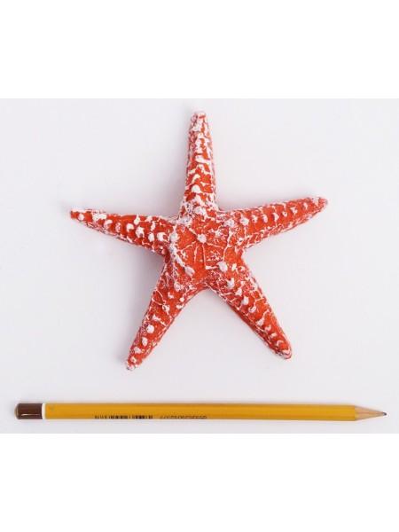 Звезда морская 13 см