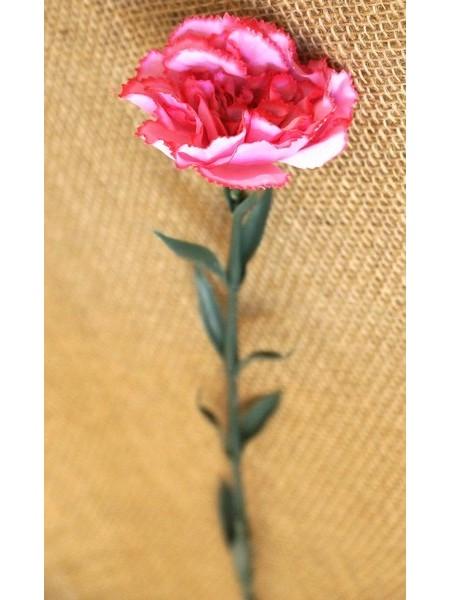 Гвоздика розовая 70см