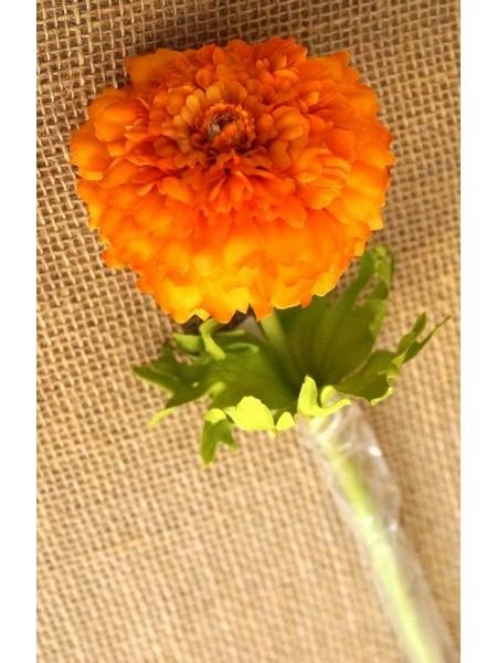 Бархатцы оранжевые 55см