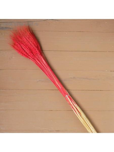 Колос пшеницы набор 50 шт цвет Красный