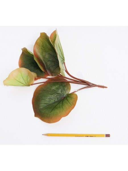 Белокрыльник болотный 30см HS-7-8