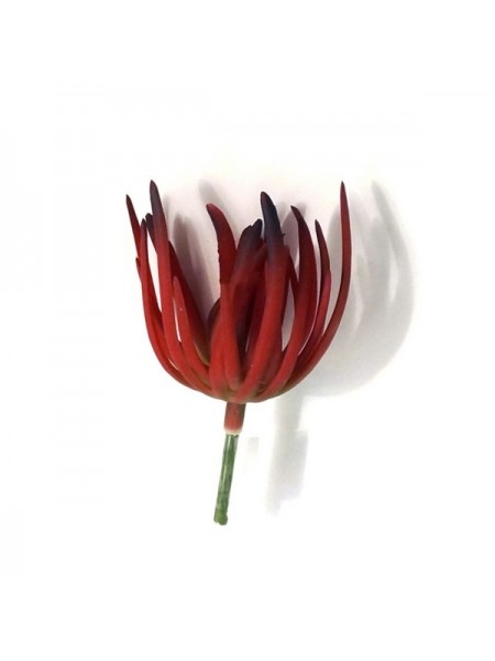 Суккулент красный 16 см