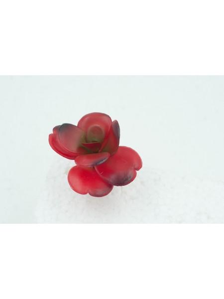 Суккулент 7*8 см цвет красный