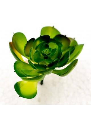 Суккулент 6*3,5*2,8см цвет зеленый